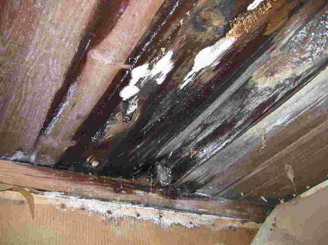 Moisture damage on the wooden structure of a Kirkland home due to the overgrowth of dangerous mold spores and colonies